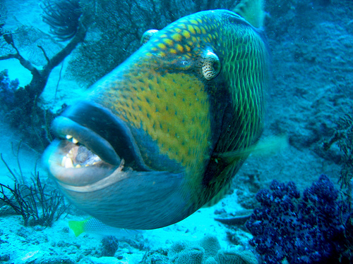 Funny pictures gallery most dangerous fish in the world for Most aggressive freshwater fish