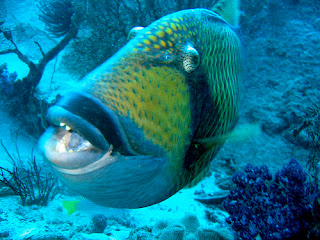 Funny pictures gallery most dangerous fish in the world for Poisonous fish to eat