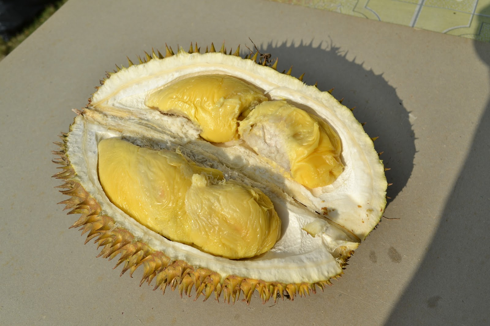 durian fruit outline Marketing and export of major tropical fruits from thailand aims to outline the intentions of the royal thai eight major fruit crops, namely longan, durian, mangosteen, lychee, rambutan, mango.