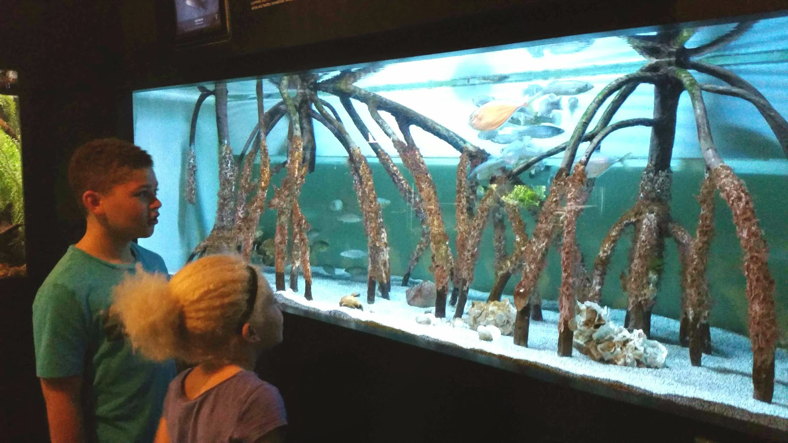 Siesta Key 2015 Vacation --Part Two:  MOTE Marine Laboratory & Aquarium --How Did I Get Here? My Amazing Genealogy Journey