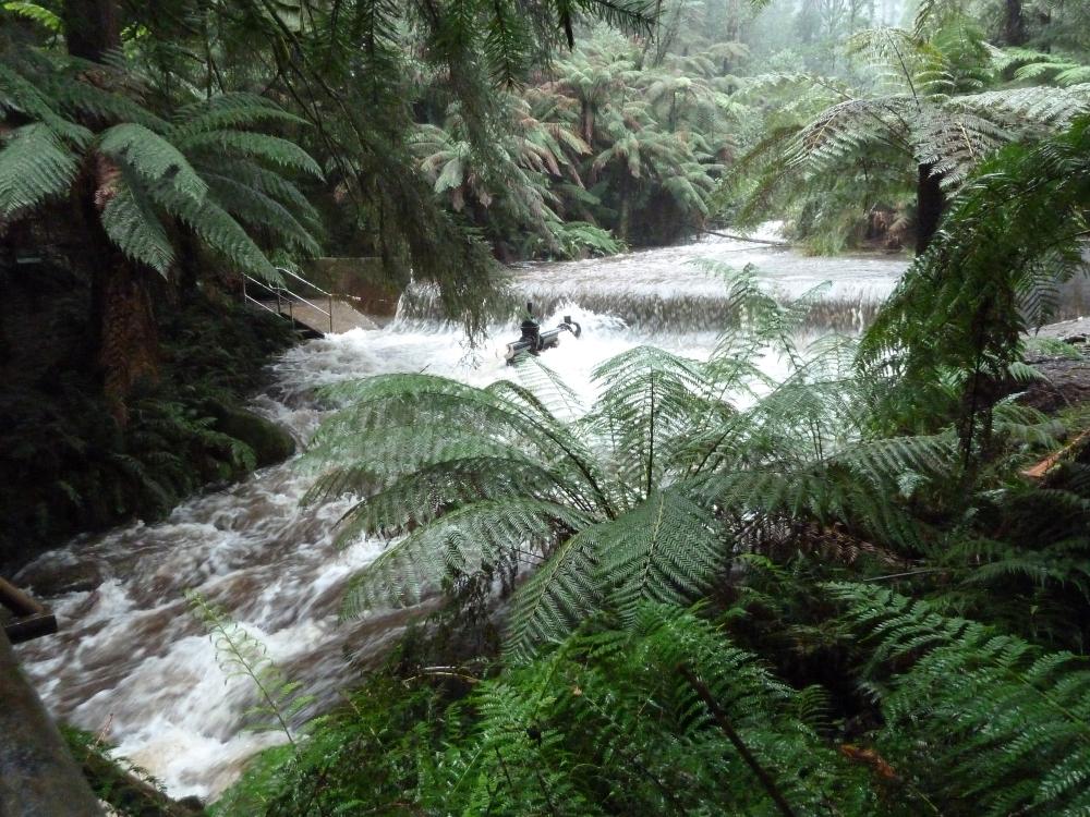 Badger Creek Australia  city images : Back To Nature:: Badger Creek Weir Healsville VIC