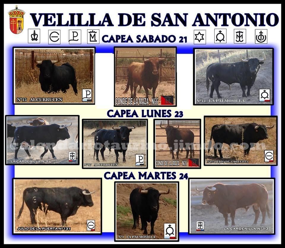 Fiestas patronales 2013 velilla de san antonio madrid - Inmobiliaria velilla de san antonio ...