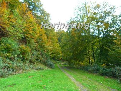 bosque de Irati (Aezkoa)a mediados de octubre de 2012