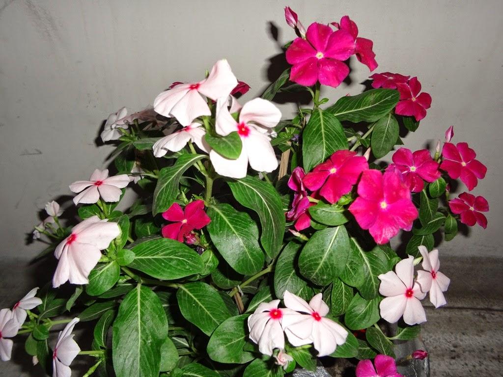 noyontara flowers