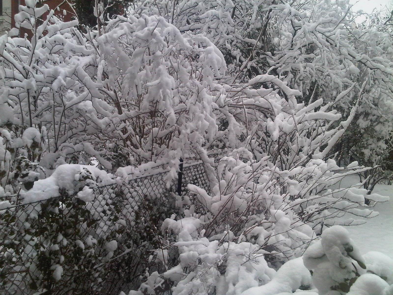 Schneebedeckte Büsche und Bäume in Hinterhof-Gärten von Hamburg