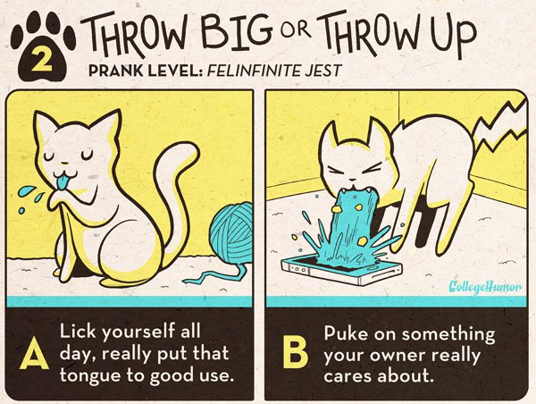 Cool pranks for cats, comic, funny