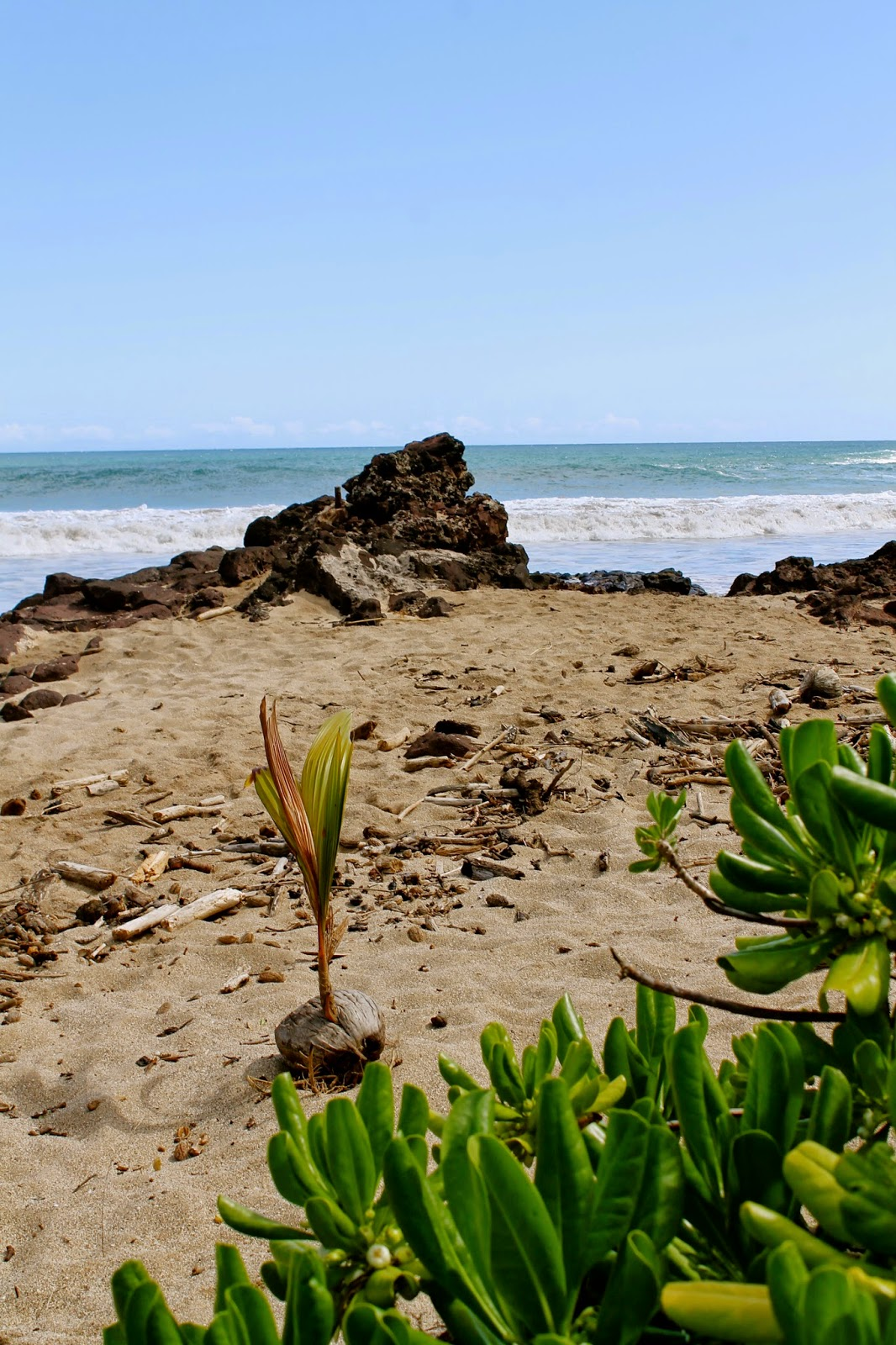 Justin D. Kondrat : Next Chapter at The National Tropical Botanical ...