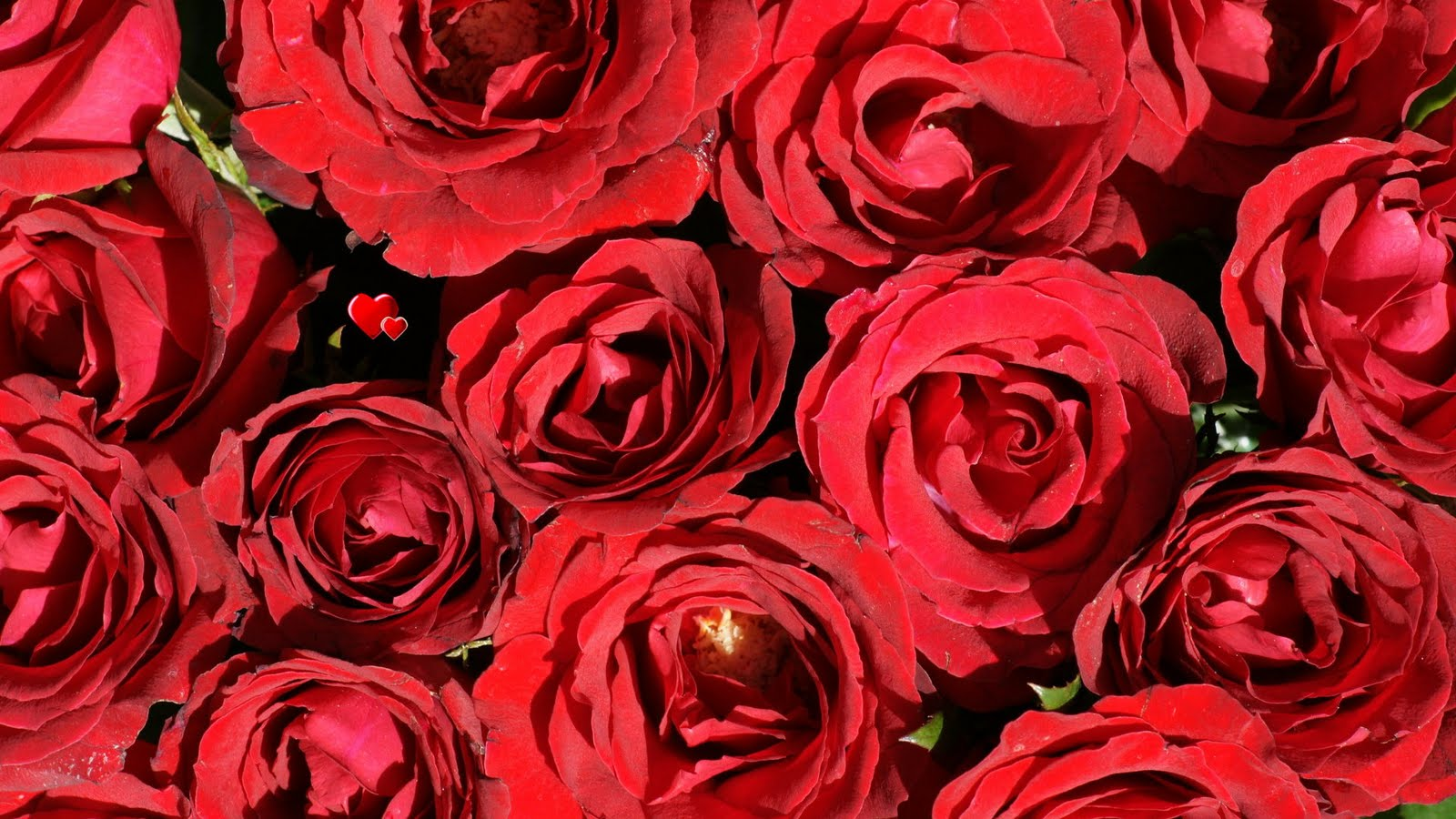 flowers & planets: beautiful rose wallpapers