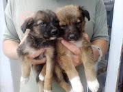 Perros Pequeños en AdopciónBuenos Aires Argentina