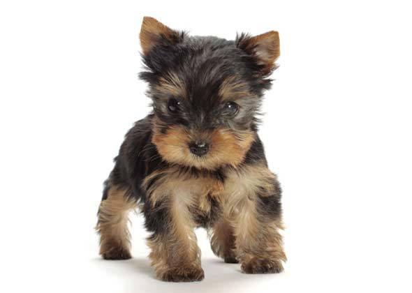 Dog Breed Test For Families