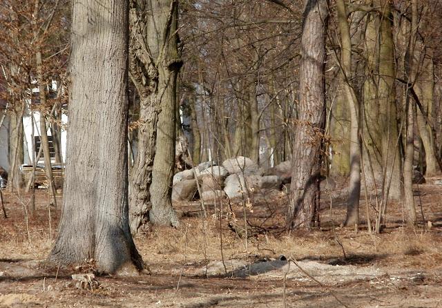 Giełzów, wschodnia część parku z widocznym zarysem kamiennego kręgu(marzec 2012). Foto. Paweł Kałwiński.
