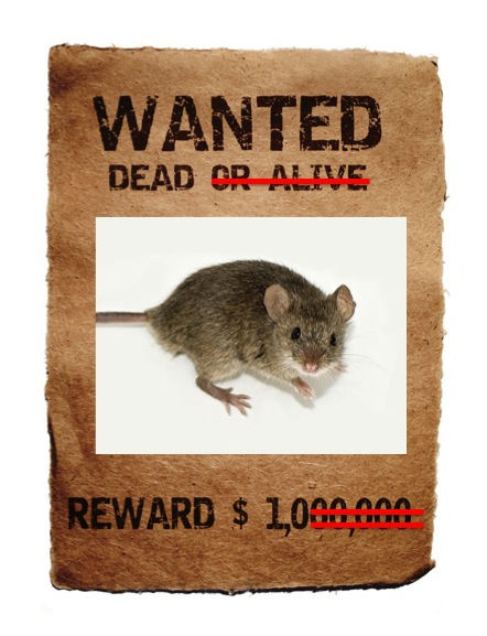 Most Likely to Have Bad Hair: Mouse Hunt: Part II