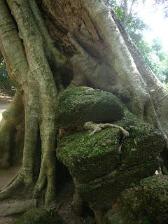 Trees Angkor Wat