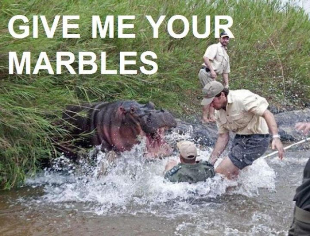 animal pictures with captions, give me your marbles