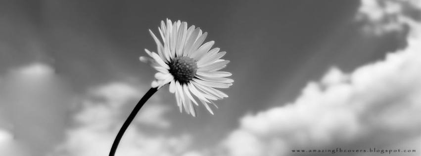 Beautiful black and white hd flowers images for facebook fb covers bw flowers fb covers
