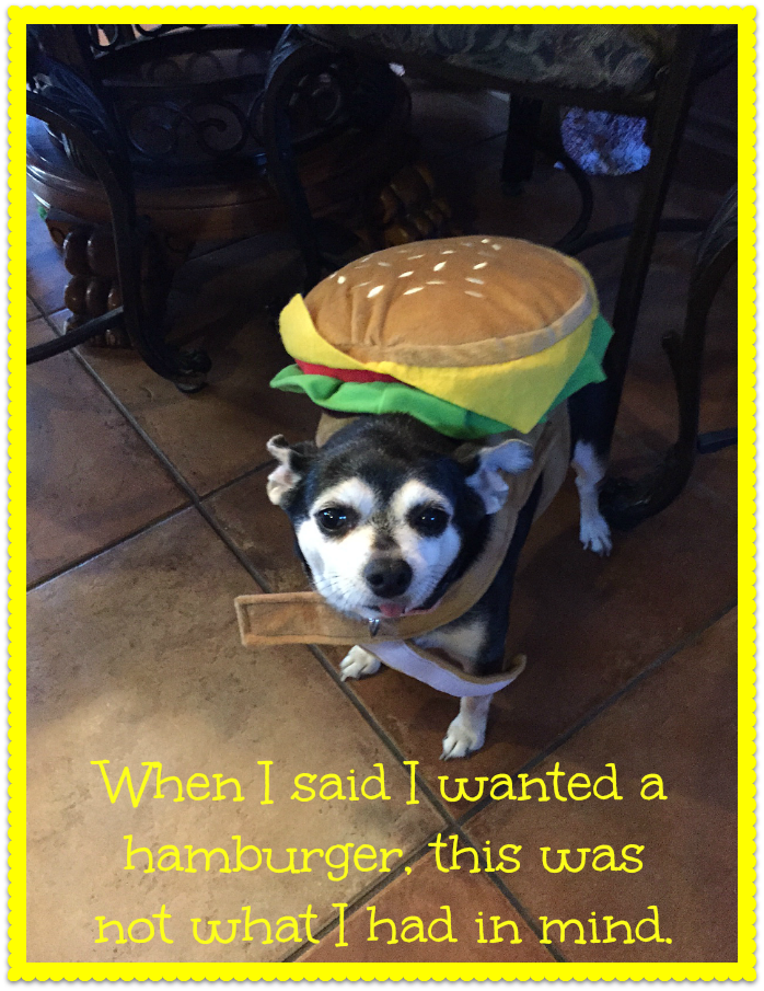 My chihuahua, Lucy, let me put this hamburger costume on her