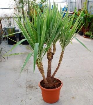 Ma maison au naturel mes plantes d 39 int rieur increvables for Plantes vertes retombantes