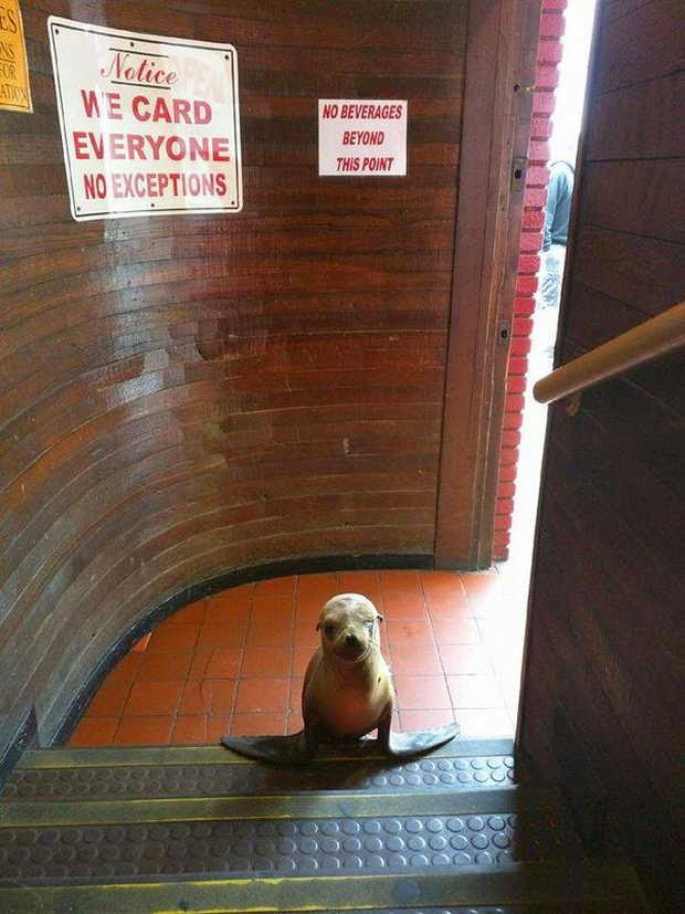 Funny animals of the week - 22 May 2015, funny animal photos, best animal pictures