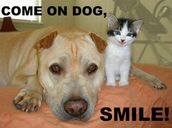 Come On Dog - Smile!