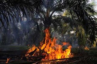 pembukaan lahan dengan cara pembakaran