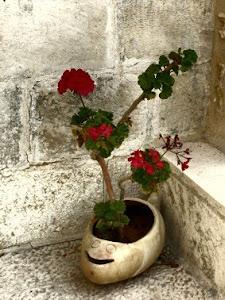 Série Vasos de Israel