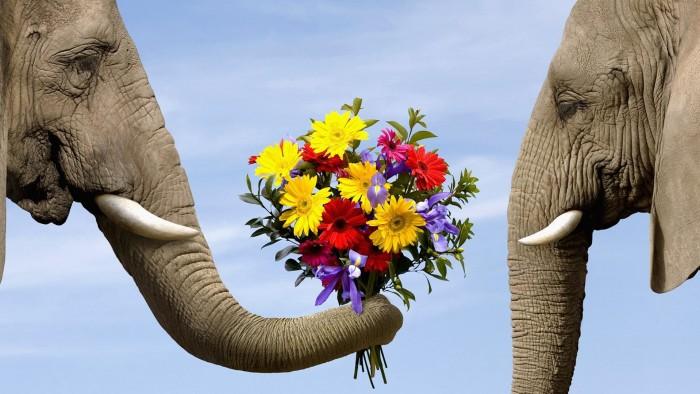 elefanti daruind flori