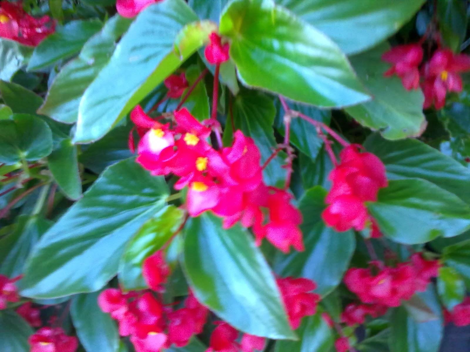 Fotos y nombres de flores de jardin - Plantas de jardin nombres ...