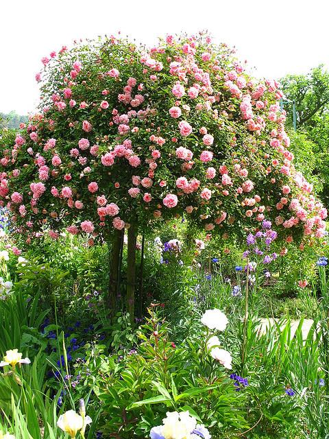 El club de las neuronas muertas jardines verticales de for Arboles de flores para jardin