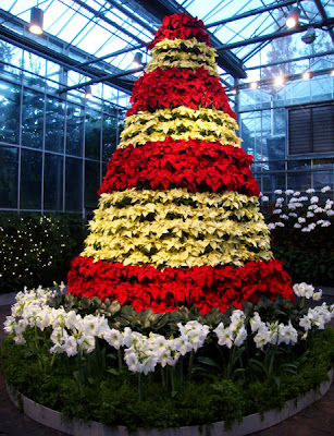 Poinsettia Tree, Orchid Center, Atlanta Botanical Garden