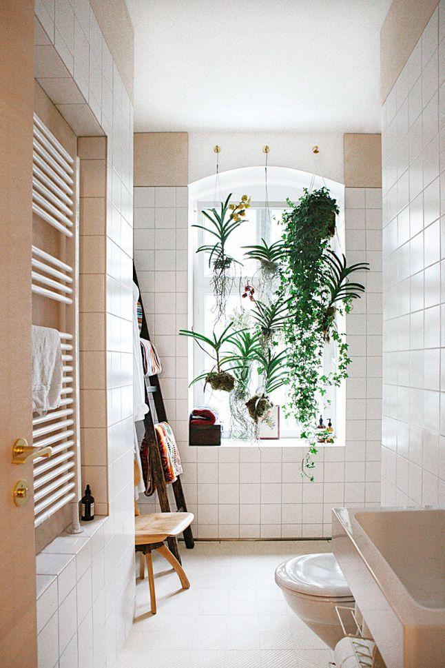 plantes salle de bain sans fenetre