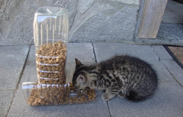 Comedouro para gatos com duas garrafas plásticas