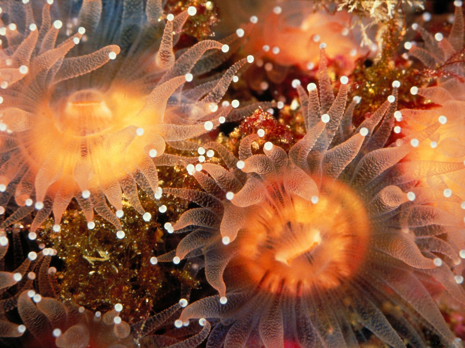 Underwater Sea Creatures
