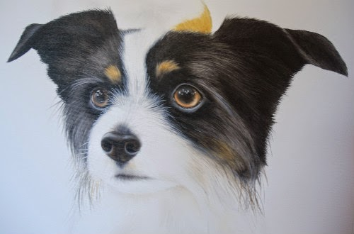 Pet Portrait Papillon Oil on Canvas