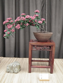 Flowering bonsai - Spring Bonsai Show, Vandusen, Vancouver
