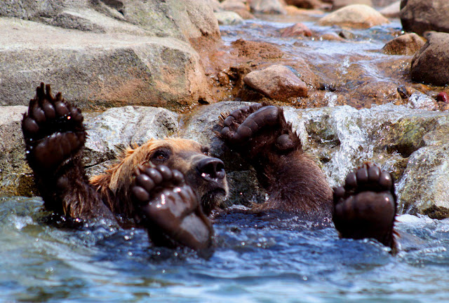 funny animal pictures, bear bath
