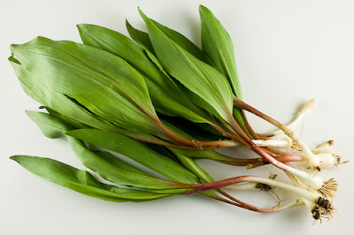 Permaculture Plants: Ramps