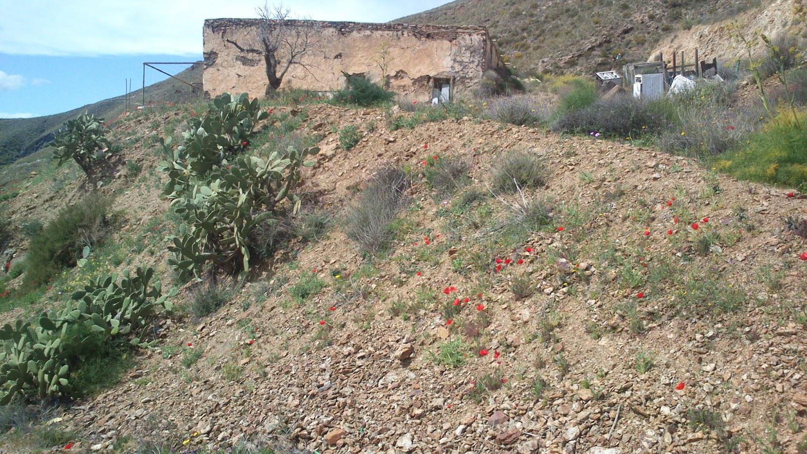 B scame en la monta a sierra alhamilla circular - Banos sierra alhamilla ...