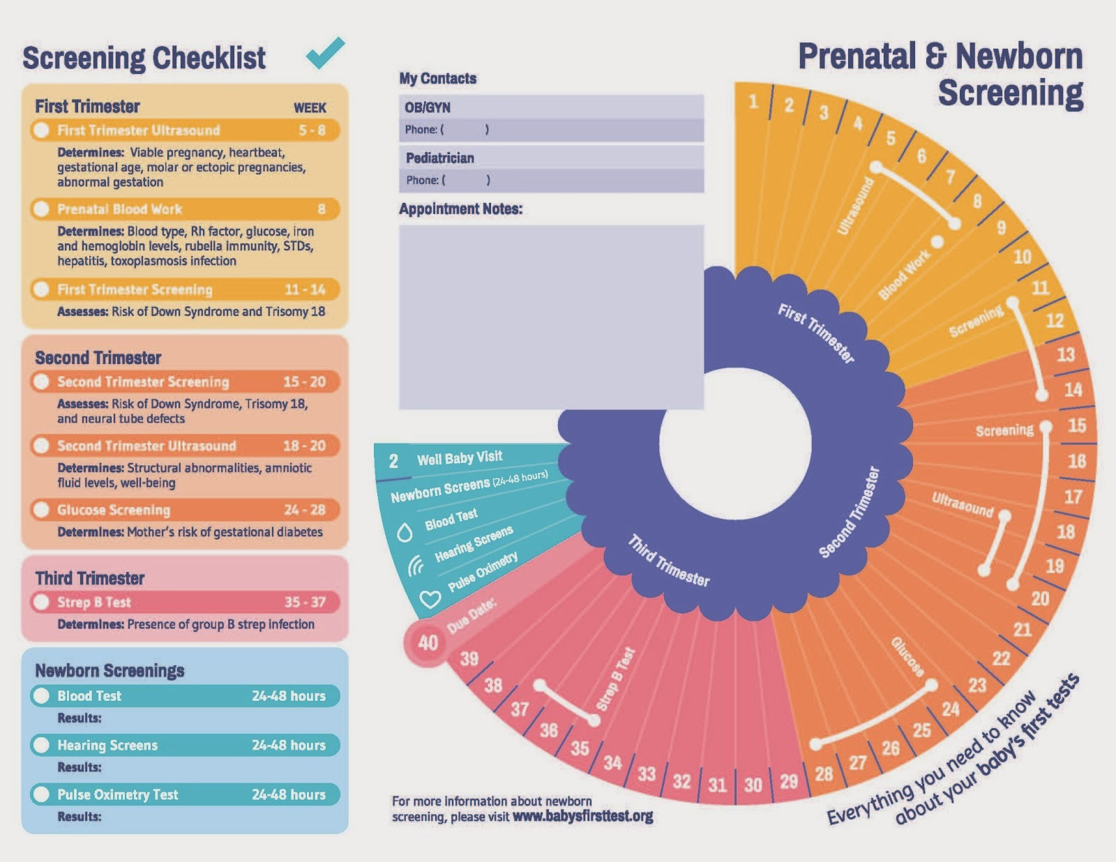 Prenatal and Newborn Screening Timeline