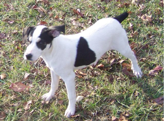 All List Of Different Dogs Breeds: Hunting Dog