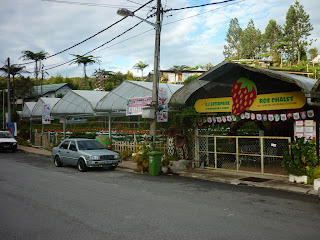 ros chalet, cameron highlands, strawberry farm, tanah rata, taman sedia