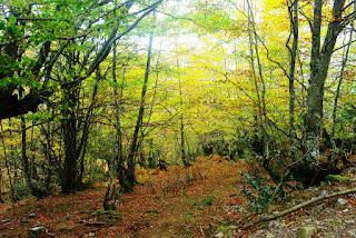 Vista de los primeros tramos del bosque