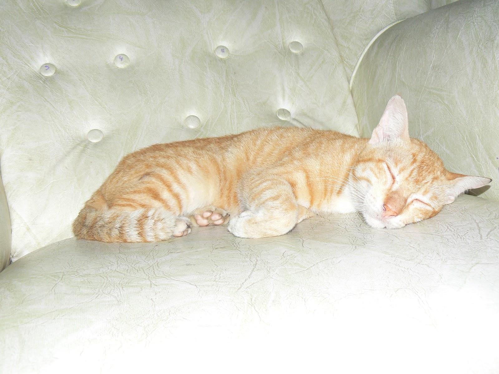 Kucing Kucing Di Rumah Kami Brilliant Dan Alden