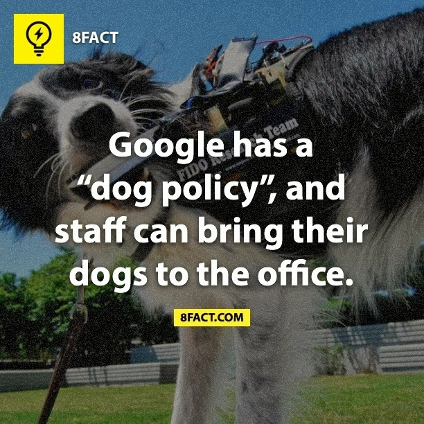 "Google has a ""dog policy""', and staff can bring their dogs to the office."