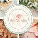My  Bouvardia Jakarta Indonesia