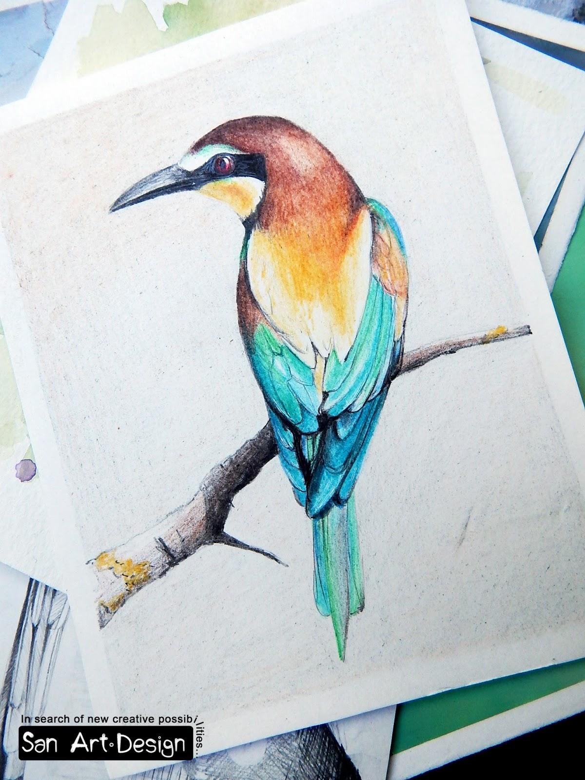 Sandra trubins art blog bird practice colored pencils drawing