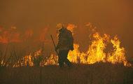 Wildfire destroys