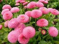 tips merawat bunga