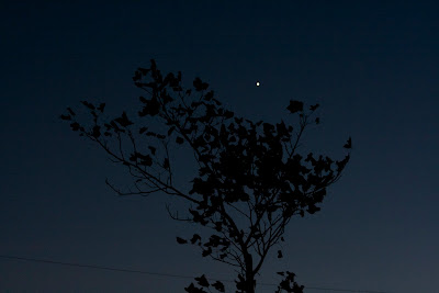 venus in a tree