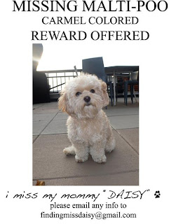 Daisy went missing...