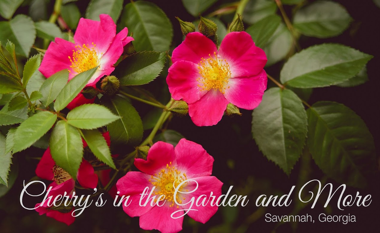 Cherry's in the Garden and More